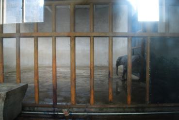 Caged and alone in China (photo China Zoo Watch , elephant calf_taiyuan zoo (13)
