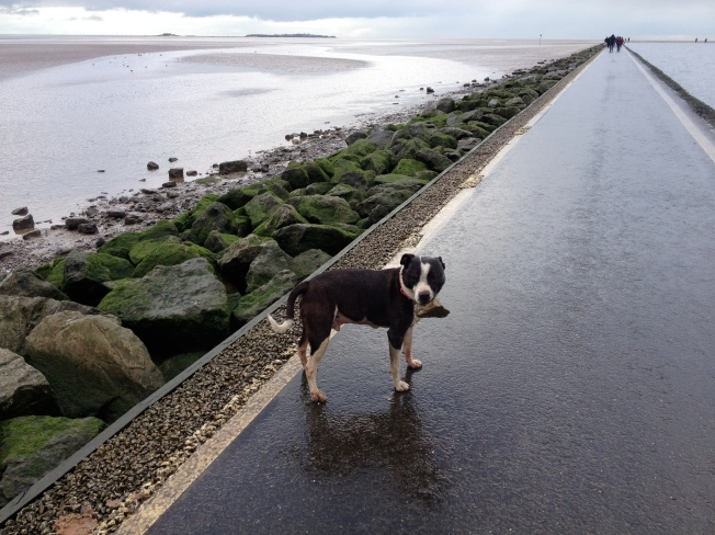Damp even for a dog - the marine lake in West Kirby