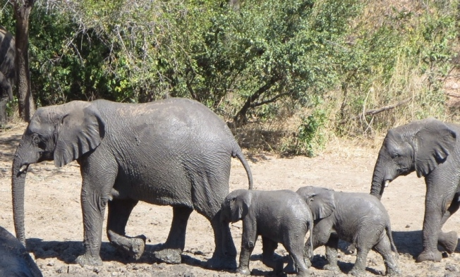 Family of elephants in Zimbabwe
