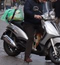A dog out for a ride in Naples