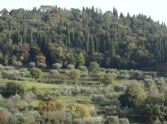 The greenery around Fiesole