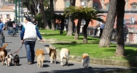 Taking the sun with dogs in Naples