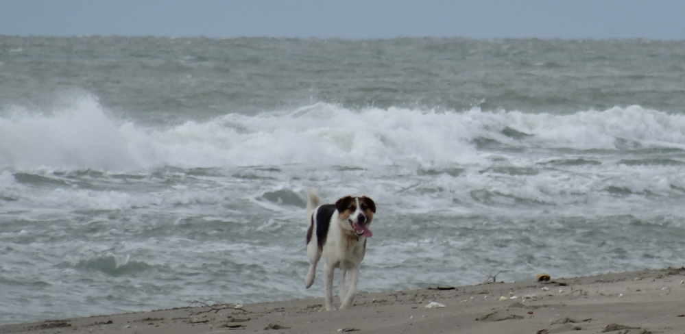 A day on a beach just north of Naples, Italy - with a dog in mind (4/6)