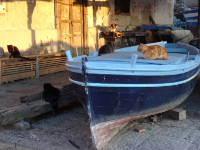 Cats in Pozzuoli wait for the catch to come home