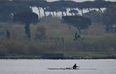 Sculler on Lago di Patria