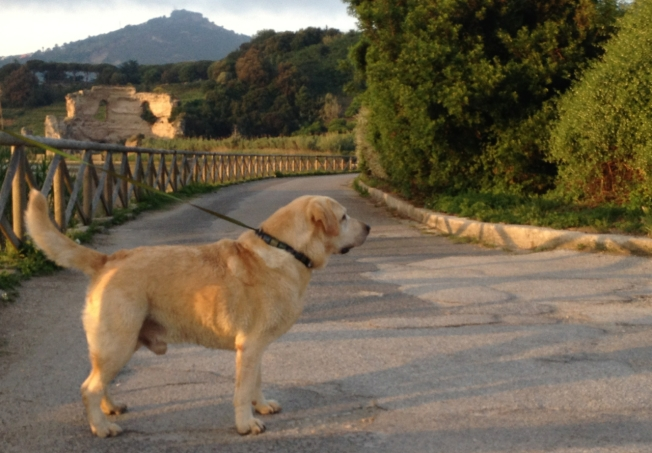 The dog, anxious for his walk on Lago d'Averno