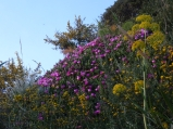 Wild flowers on Capo Miseno