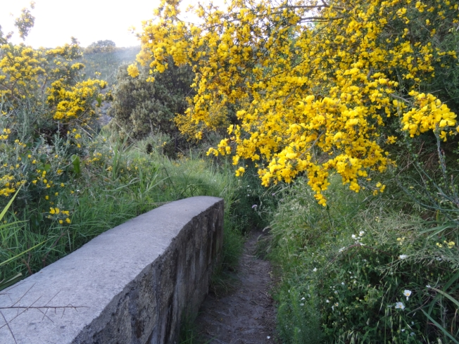 Path through the flowers on Capo Miseno in May