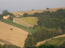 The well-worked fields around Montelparo, Le Marche