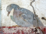 Detail from a fresco in the Villa San Marco in Stabiae