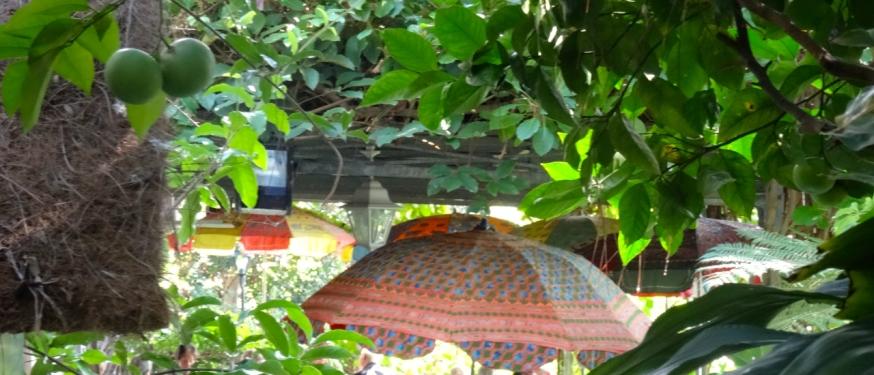The shade for tea in La Mortella, Ischia