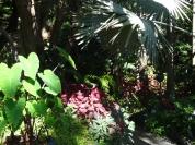 La Mortella, Ischia