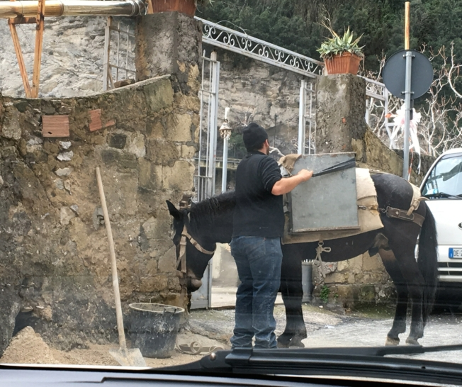 Mule being loaded for work in Positano on the Amalfi Coast in Italy
