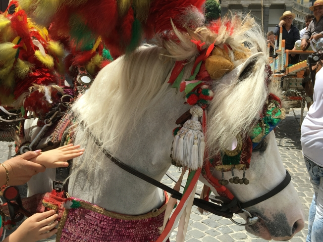 Hats off to the horses who paraded in Naples, Italy
