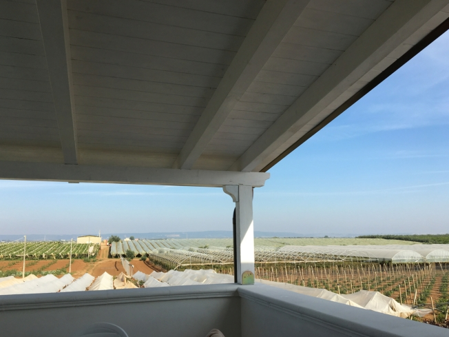 The view from the balcony of the Agriturismo Biologico Sant'Andrea in Puglia