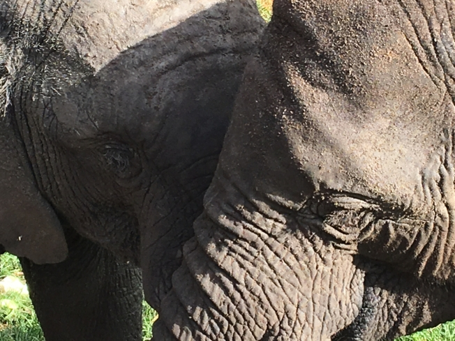 Young elephants at the Elephant Nursery outside Harare, in Zimbabwe