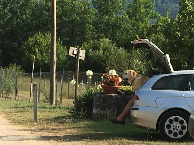 Arrival at Le Stelle di Giurò in Cilento, Italy - new legs for the dog