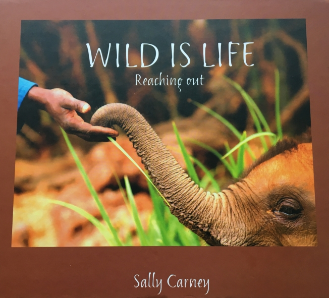Wild is Life by Sally Carney