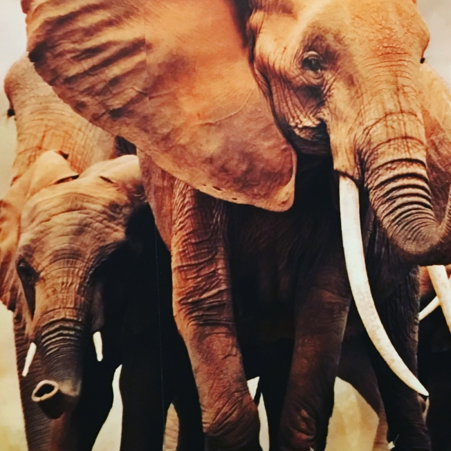 Part of the WWF-UK banner at the reception in the Houses of Parliament in London to mark the closure of China's domestic ivory market