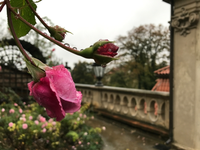 The Gardens below Prague Castle
